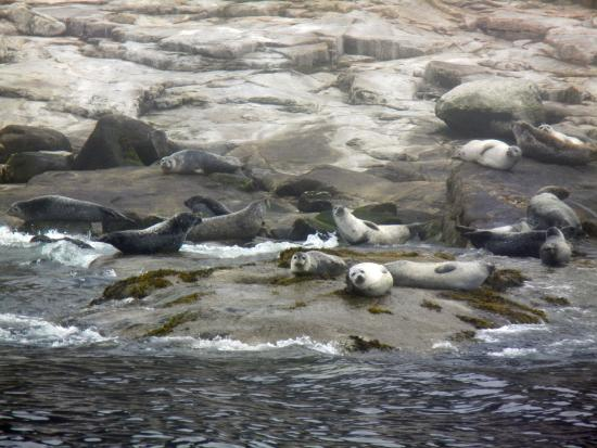 Cute seals picture of acadia fishing tours southwest for Maine deep sea fishing charters