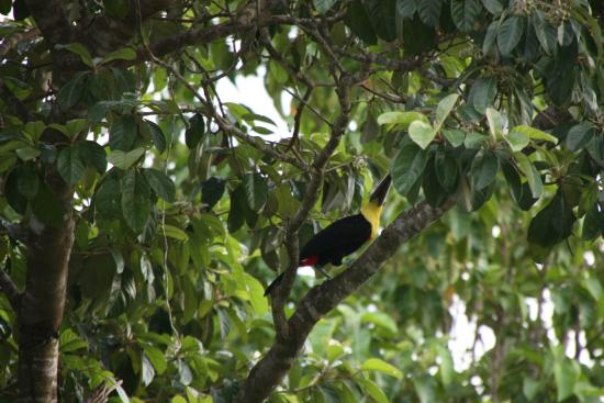 Photo of Brisas del Paraiso/Paradise Breezes Dominical