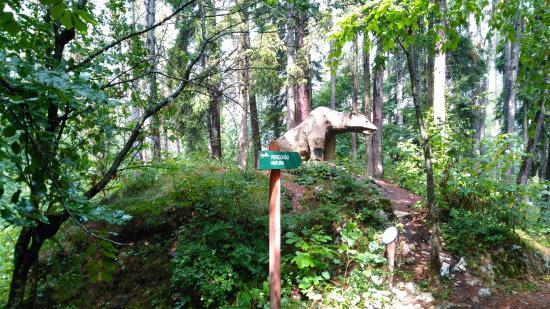 Percorso Natura: orso