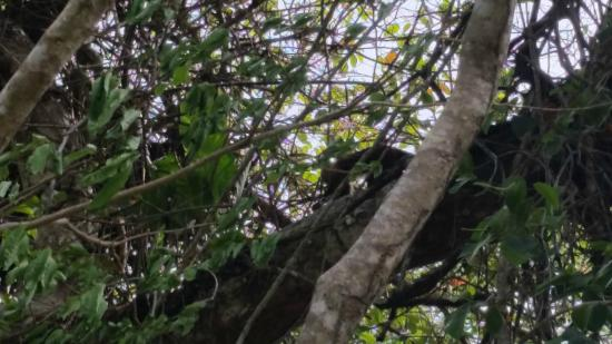 Camping Tayrona: monkey