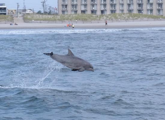 Thundercat Dolphin Watch: Thunder Cat
