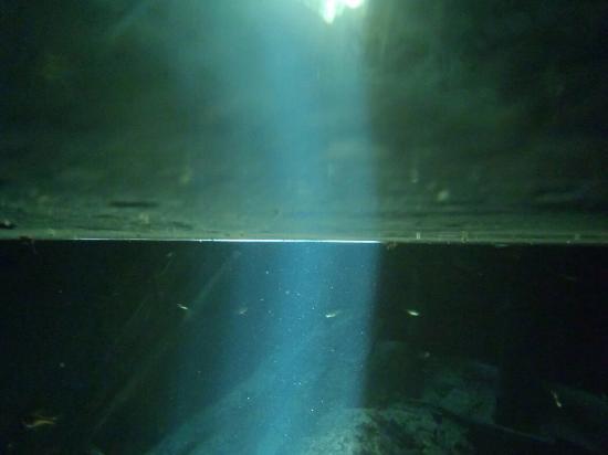 Cenotes Dos Ojos: photo2.jpg