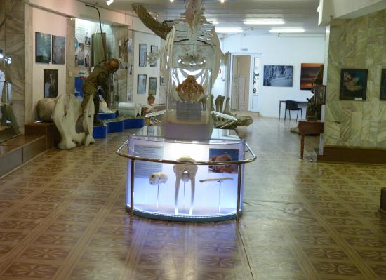 Museum of The Institute of The Sea Biology