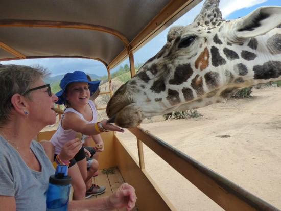 Comfort Inn : Out of Africa Wildlife Park  Camp Verde