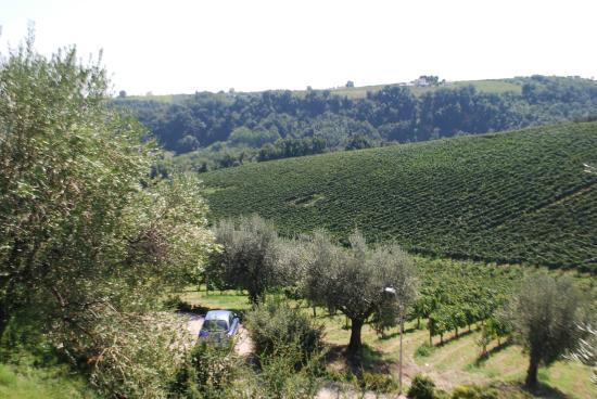 Orsogna, Italia: Beautiful grounds