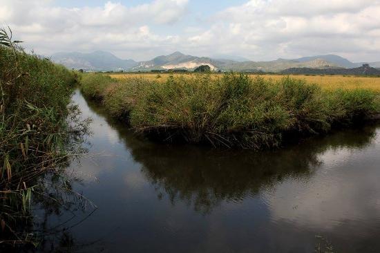 Parque Natural del Marjal de Pego-Oliva