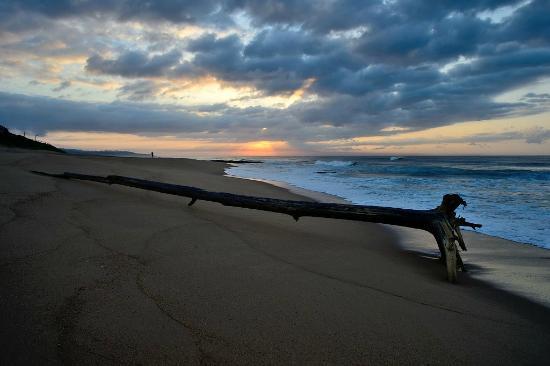 Zinkwazi Beach: A temporary visitor