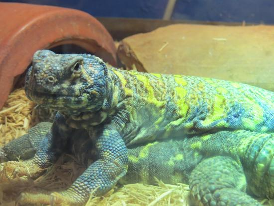 how to start a reptile rescue