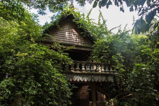 Banyan Tree Kampot