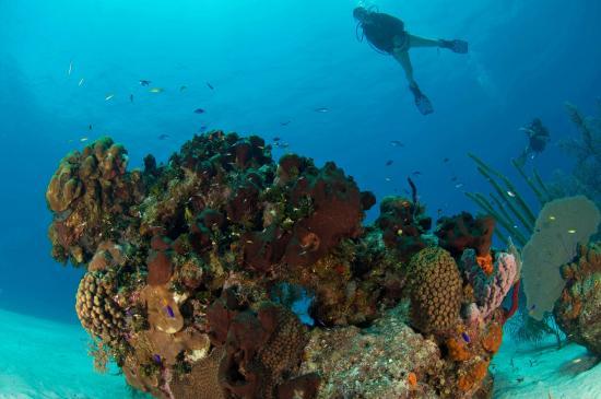 Turneffe-øyene, Belize: Scuba Diving