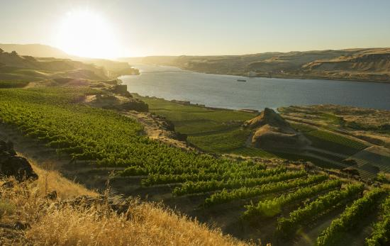Goldendale, WA: Overlooking estate vineyards from Maryhill