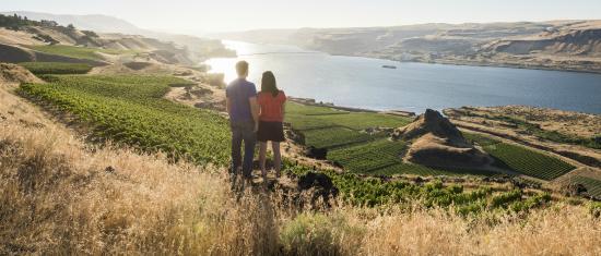 Maryhill Winery: Overlooking estate vineyards at Maryhill
