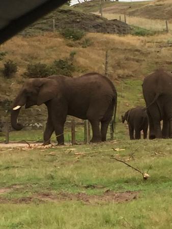 Bilde fra West Midland Safari and Leisure Park