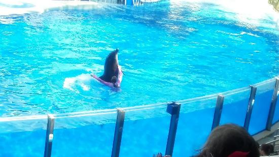 SeaWorld Orlando: Loved this show