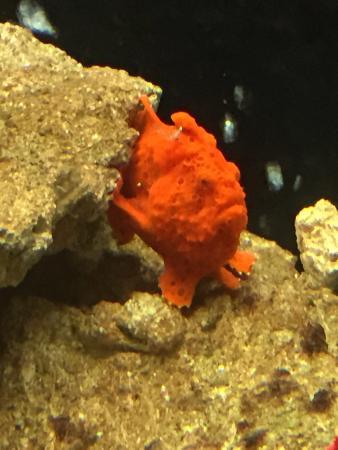 Grand Aquarium: photo2.jpg