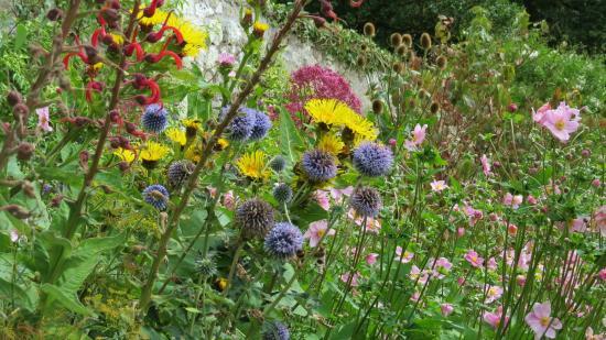Trewidden Garden: Trewidden walled garden