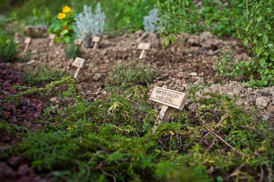 Herbal glamping resort Ljubno - herbal garden