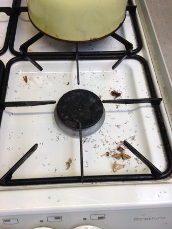 The cooker :(