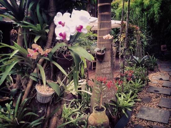 Pousada Riacho dos Cambucas: Jardim