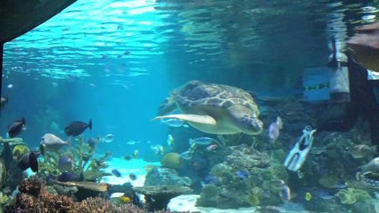 Giant Sea Turtle Picture Of National Aquarium Baltimore