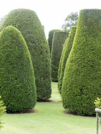 Packwood House: Packed House Topiary