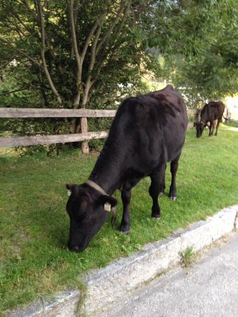 Hotel Elisabeth: Los lopende koeien