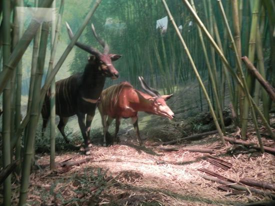 Atracciones American Museum of Natural History