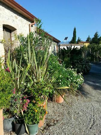 MG Florplant Srl: Verdure le long des chambres