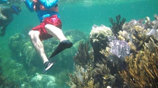 Hotel Arrecifes Suites: Snorkeling at reef