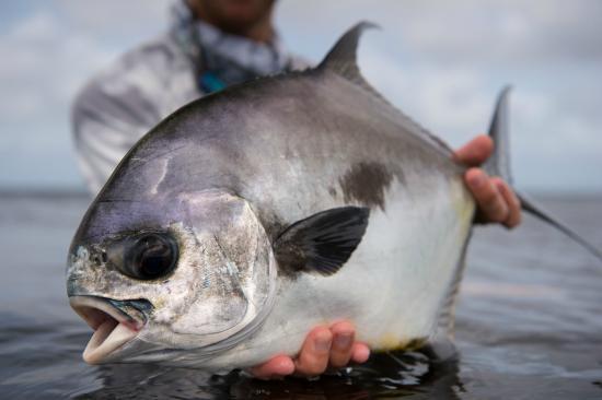 Turneffe-øyene, Belize: Turneffe offers some of the finest Permit fishing in the world