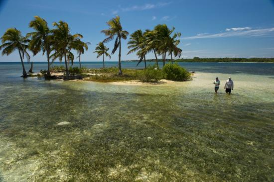 Turneffe-øyene, Belize: Fishing a small caye near Turneffe Flats