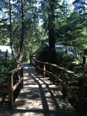 Clayoquot Wilderness Resort: Walkway to the tent
