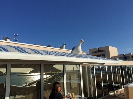 Les Mouettes Attendent Le Petit Déjeuner Sur La Terrasse Hôtel PORT - Hotel port marine sete