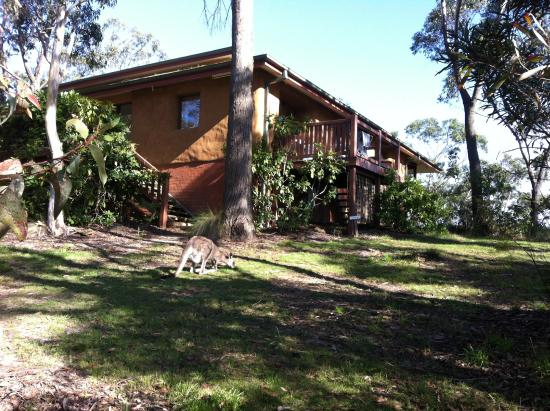 Blackheath, Australia: Kangaroos often visit the meditation centre