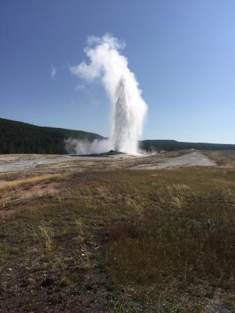 Grizzly Country Wildlife Adventures: Old Faithful