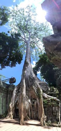 Siem Reap, Cambodia: photo0.jpg