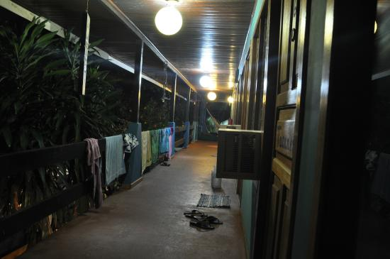 Hotel Kangaroo: Kangaroo