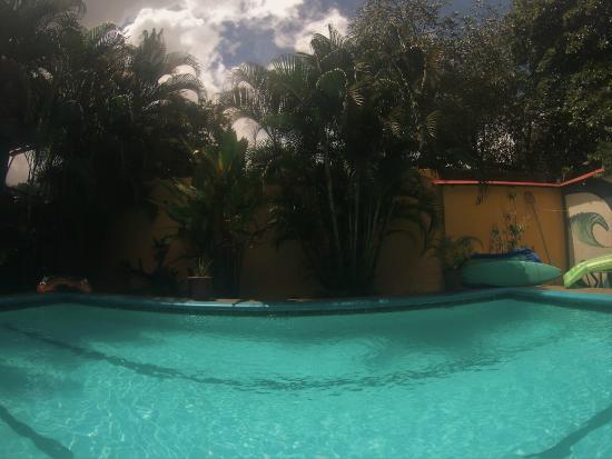 Hotel Kangaroo: Kangaroo pool