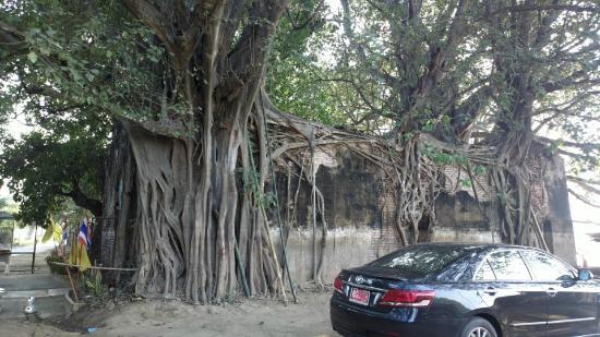 Wat Sai: เป็น สถาปัตยกรรมที่ ธรรมชาติ รังสรรค์ ได้ งดงาม
