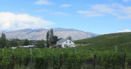 Saxon Winery Ltd : Saxon Winery, Summerland, Okanagan Valley, British Columbia
