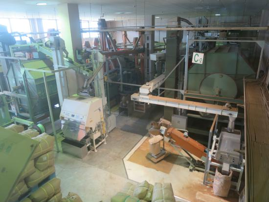 Gurinpia Makinohara: 製茶工場内部