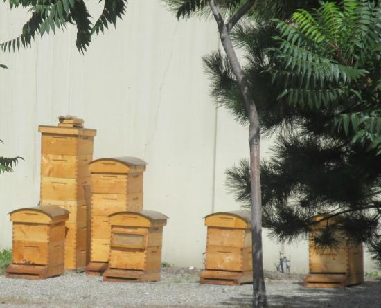West Kelowna, كندا: Bee Hives, Mission Hill Winery, West Kelowna, BC