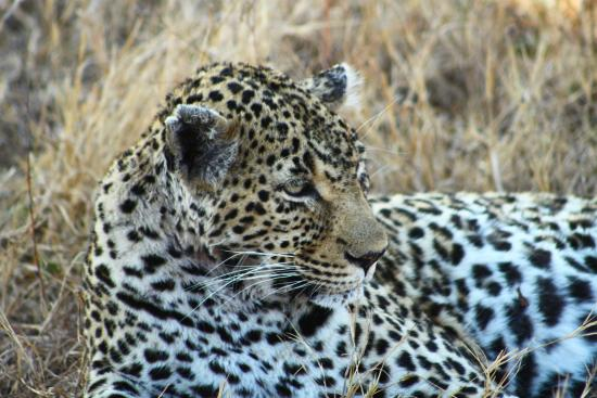 Tydon Bush Camp : Leopard sighting on first game drive.