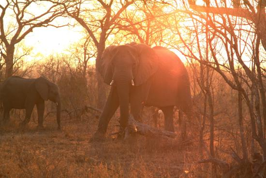 Tydon Bush Camp : Photo of elephants at sundown.