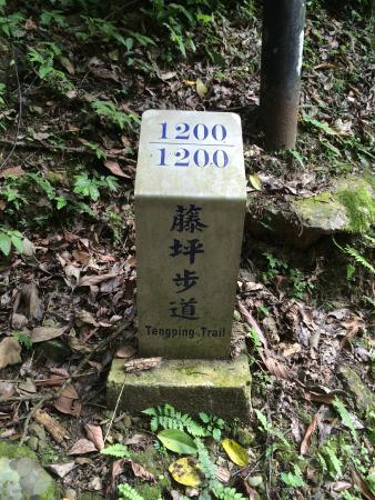 Emei, Hsinchu County: 藤坪步道