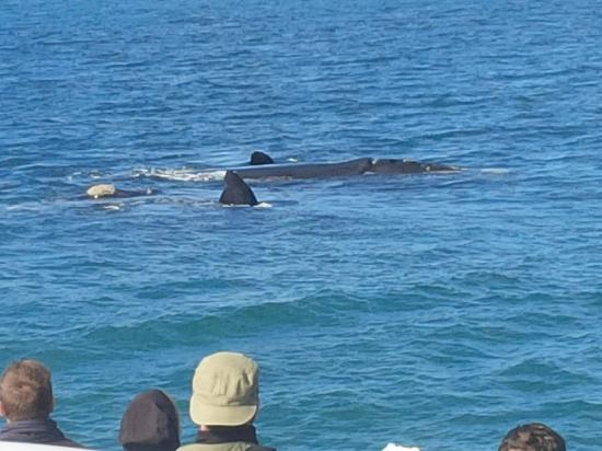 Hermanus, South Africa: whales 2