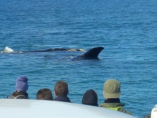 Hermanus, Südafrika: whales 3