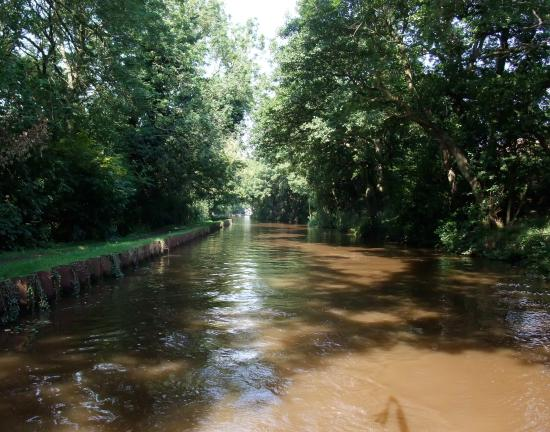 Airedale Cruising - Private Day Cruises: A view of the canal in Farnhill Wood