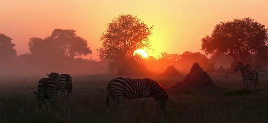 Makgadikgadi Pans National Park, Botswana: Zebre Migration at Meno a Kwena