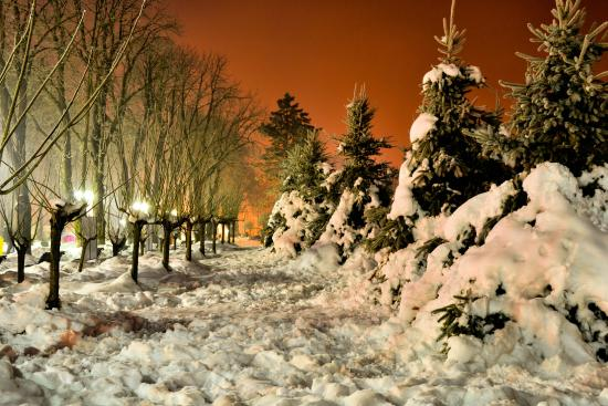 Copou Park